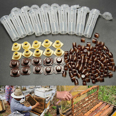 10X Beekeeping Rearing Cup Kit Queen Bee Cages Beekeeper Tool&100x Cell CupRCCA