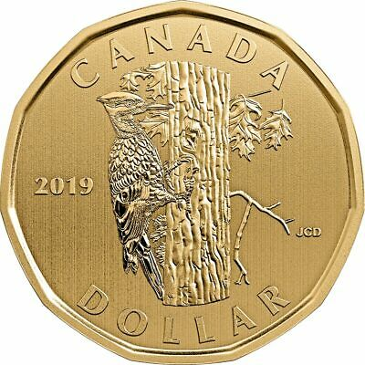 2019 Canada Pileated Woodpecker Specimen Loon Dollar $1 coin only - IN STOCK!!