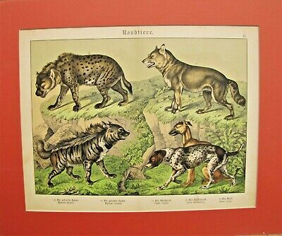 19th. Century German Hand Colored Print from a Book - CANINES
