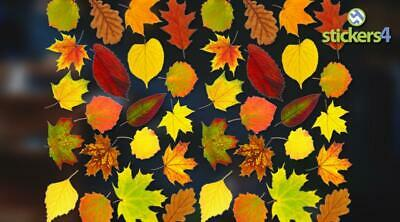 Photorealistic Autumn Leaves Shop Window Stickers - Pack 2