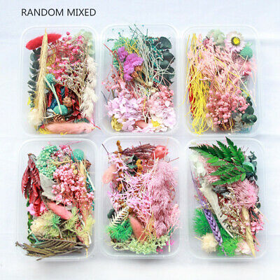 1Box Real Dried Leaf Flowers Plant Herbarium Craft Jewelry Making Gift DIY Art