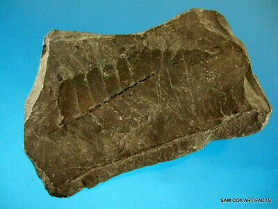 Super Fine Authentic KY Shawnee Springs Double Sided Fossilized Fern Arrowheads