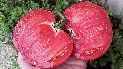 10 graines de tomate ancienne rare Rustique de Saint-Flour heirloom tomato m.bio
