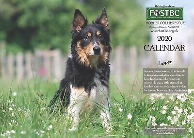 2020 Calendar for FOSTBC Border Collie Dog Rescue Charity