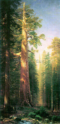 Bierstadt The Big Trees Mariposa Grove California Artist Painting Reproduction
