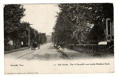 Horse & Carriage Oak Avenue Knoxville TN Street Scene Postcard Unposted