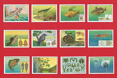 Poster Stamps Biothechnique How Nature Observation Can Help Sciences Development