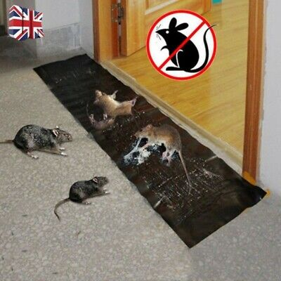 US Large Size Mice Mouse Rodent Glue Traps Board Super Sticky Rat Snake Bug Safe