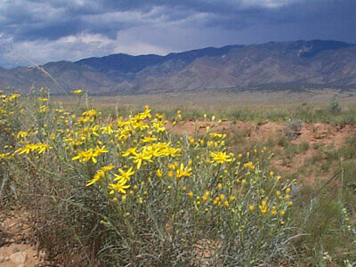 $$ Beautiful property - Just miles outside of Douglas, AZ! $$