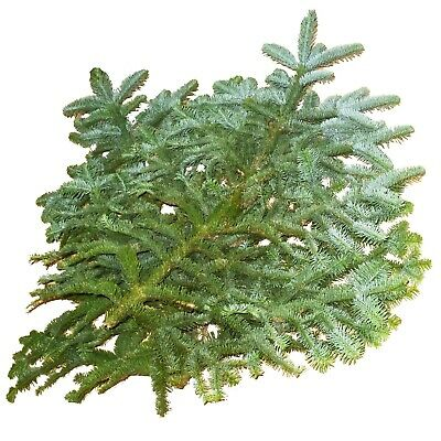 5 BRANCHES OF FRESH NORWEGIAN SPRUCE (80-100cm) FOR CHRISTMAS DECORATION DISPLAY