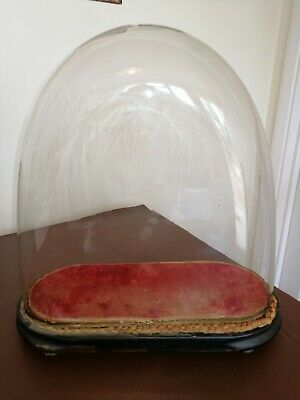 Antique 19TH CENTURY Large OVAL Glass Dome With Original velvet lined Base