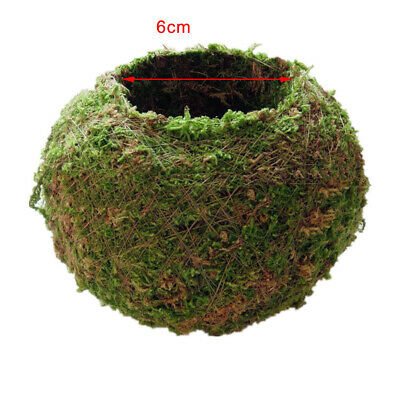 Natural Dry Moss Ball Bonsai Sphagnum Moss Planting Ball Flowerpot 6cm/2.3in