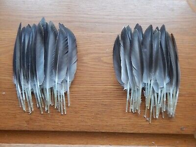 Teal Duck Wing Quill Feathers Fly Tying Art Crafts 50