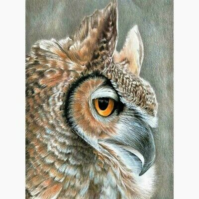 """Colour Pencil By Number Kit  SEPIA OWL  9"""" X 12"""""""