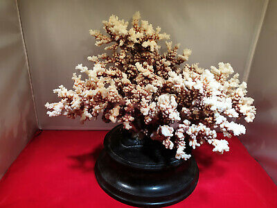 Very large beautiful early 20th century coral specimen on wood stand