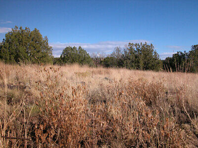 1.25 +/- Beautiful Investment Property in 1.5 Hours From Flagstaff, AZ!