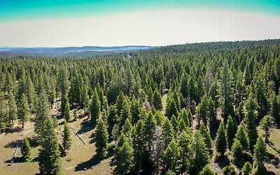 0.84 Acres in Modoc County (California Pines)