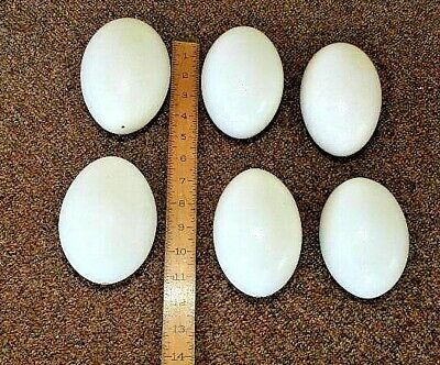 6 Blown Out Clean White Eggs Rhea  For Crafting, Art, Carving