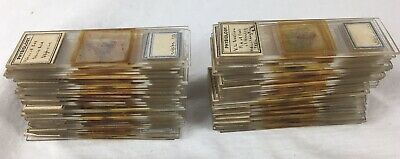 Antique Collection Of Prepared Microscope Slides, Physiology Specimens,