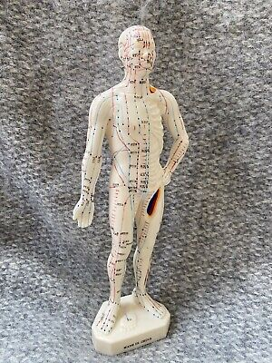Acupuncture Meridian Doll Model  New