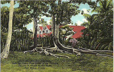 Fort Myers, Florida, Thomas A. Edison, Winter Home, Fig Tree - Postcard (UU)
