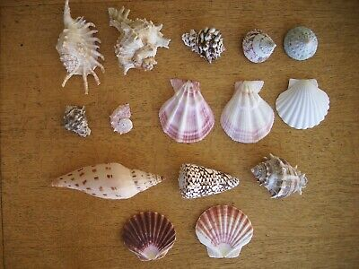 A selection of Seashells from around the world  Wedding table /Display Art+Craft