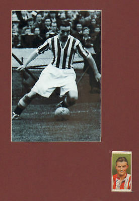 STANLEY MATTHEWS signed cigarette card + picture in display UACCRD  retirement