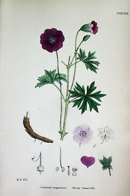 Complete Book with 164 hand colored Litho,Violets,Pansies,Carnations,etc.1873
