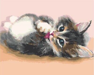 Cute kitten - 40 x 50 cm High Quality Paint by Numbers Kit Cotton Canvas stretch