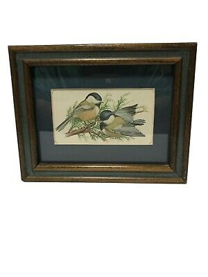 Carolina Chickadee Birds Perched On A Branch Framed Photo