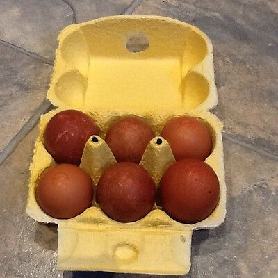 SOLD OUT 10x Heavy Duty YELLOW Half Dozen Rainbow Cardboard Egg Boxes (M/L) Pack