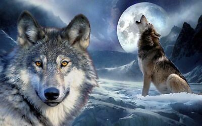 BUY 2 GET 3RD FREE Wolf Highlands Wild Nature Animals WHW01 POSTER ART PRINT