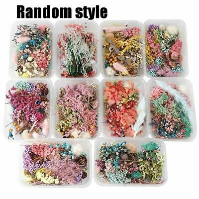 Real Dried Dry Leaf Flowers Plant Herbarium Craft Jewelry Making Resin Casting
