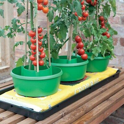 3x Plant Halos Green Watering Halo Ring Tomato Grow Bag + Bamboo Cane Support