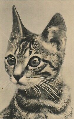 Vintage Cat Postcard Kitten with Big Eyes Unposted Series #2532