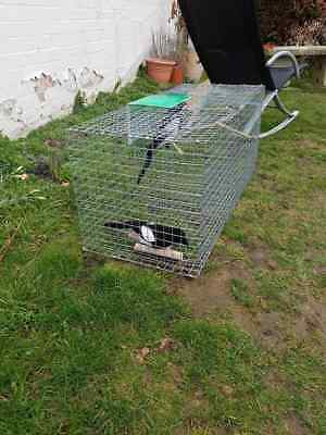 1   Single Entry Magpie Trap,  Larsen Ready To Use, £48.25  Hand Made In Uk