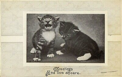 "Vintage Cat Postcard Kittens "" Greeting and Love Sincere"" Posted 1912"