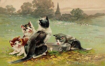 Vintage Cat Postcard Kittens in a Field Embossed Posted 1908