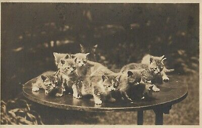 Vintage Cat Postcard Kittens on a Table RPPC Unposted