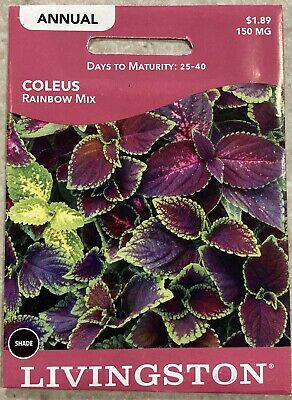 """MIX Coleus flowers /""""Blume Rainbow/"""" Seeds from Russia."""