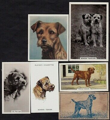 6 Different Vintage BORDER TERRIER Tobacco/Cigarette/Tea Dog Cards Lot