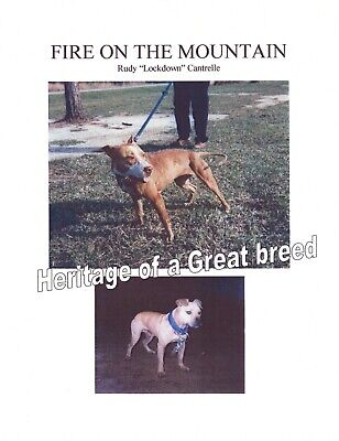 Pit Bull Book Fire On The Mountain Lockdown Rudy