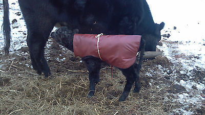 Beef Cattle-New Item Out - Baby Calf Saver Coat Blanket