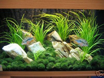 50 MOOSKUGEL /  MOOSKUGELN 4 - 5 cm f. Aquarium • EUR 34,90