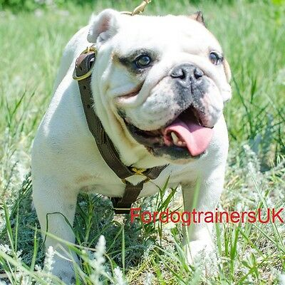 Handcrafted Leather  Dog Harness H7  - English Bulldog