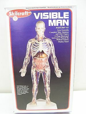 Visible Man Anatomy Kit By Skilcraft New Learning Toy