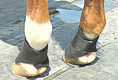 Scalping Boots for Horses - Protect the coronet band
