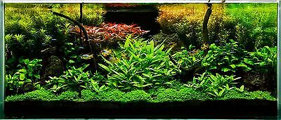 25 Live TROPICAL Aquarium plants fish tank cabomba vallis ludwigia bacopa