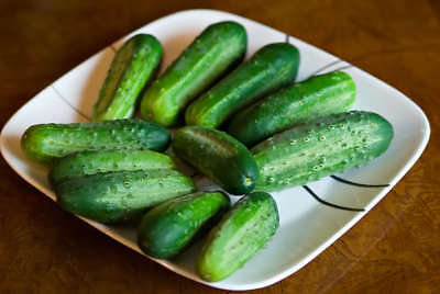 Cucumber BOSTON PICKLING 20 Seeds (HEIRLOOM)