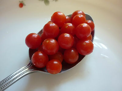 "Heirloom Red Tiny Cherry SPOON TOMATOES Sweet - Called ""Red Currant""- 25 seeds"